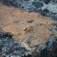 mini brož vavřín (růžové zlato)