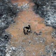 prsten basic vavřín (titan)