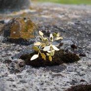 prsten vavřín velký (zlato)