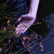brož ivy leaves